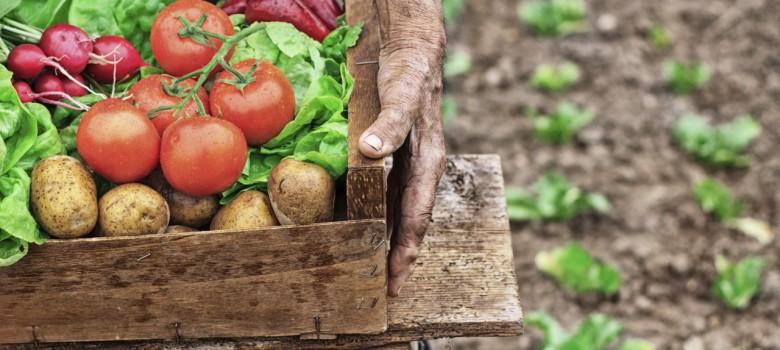 Dove trovare prodotti alimentari locali